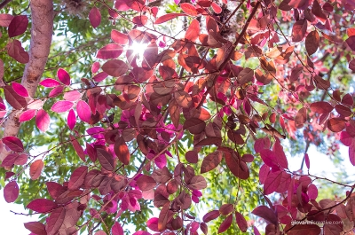 Sun Rays Through Leaves